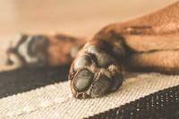 Foto Il mio Cane si è slogato una zampa