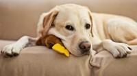 Foto Lievito Ultra al Cane: quali benefici?