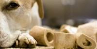 Foto Micotossine: un pericolo per i cani?