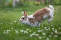 Foto Piante tossiche per il coniglio nano