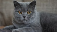 Foto I tratti caratteriali principali del Gatto