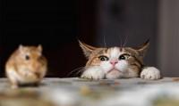 Foto Perché il gatto gioca con la sua preda senza mangiarla?