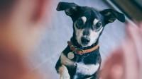 Foto Come funziona la digestione dei cani?