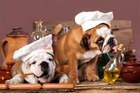 Foto Perchè l'alimentazione è importante per il pelo e la pelle del cane?