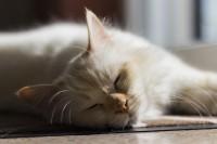 Foto Gatti e sole: benefici e pericoli