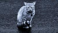 Foto Dove vanno i gatti quando piove?