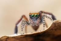 Foto Animali che hanno più occhi?