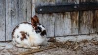 Foto Come si comportano i conigli quando si annoiano?