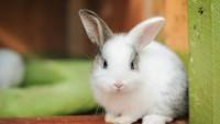 Foto Come e dove accarezzare un coniglio