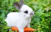 Foto Come insegnare al coniglio a venire da te