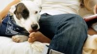 Foto 4 motivi per cui i cani ci leccano i piedi