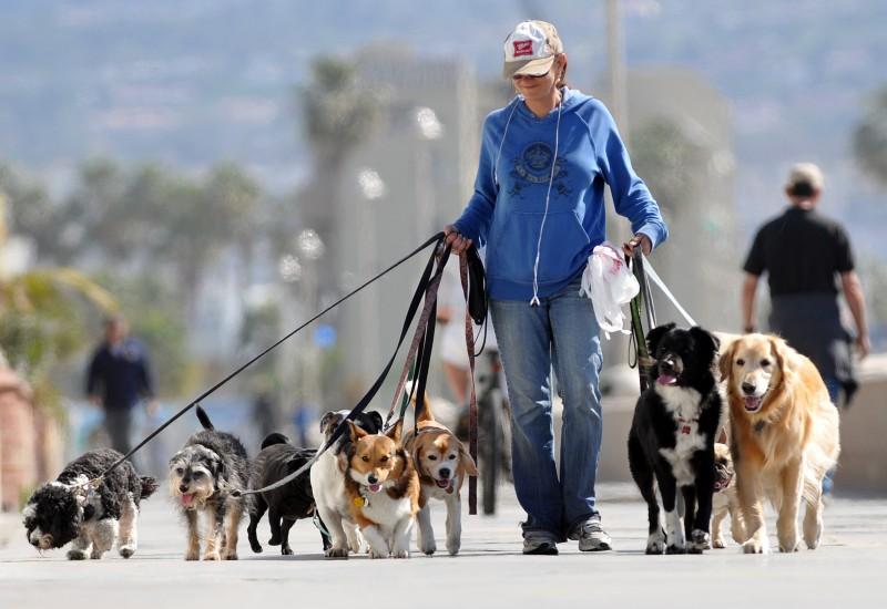 Foto Come scegliere un buon Dog Sitter