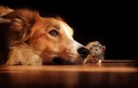 Foto Il mio cane ha mangiato un topo: cosa faccio?