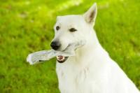 Foto Il mio cane ha mangiato plastica: cosa faccio?