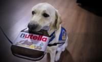 Foto Posso dare Nutella al mio Cane?