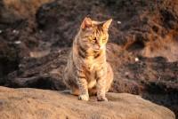 Foto Abituare un gatto randagio a casa