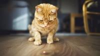 Foto È pericoloso per i gatti giocare con il puntatore laser?