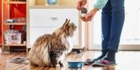 Foto I 10 migliori alimenti naturali per la salute del gatto