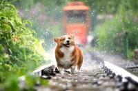 Foto Curare il dolore del Cane con olio di CBD