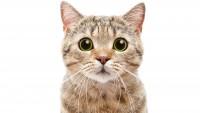 Foto Cacca del gatto: quando è normale e quando non lo è