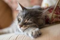 Foto Cosa fare se il tuo gatto ha i vermi e come evitarli