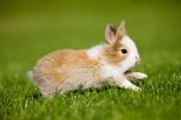 Foto Quanto veloce possono correre i Conigli?
