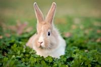 Foto 10 segni che il coniglio sta morendo