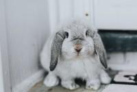 Foto Perchè il mio coniglio sbava?