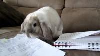 Foto Mangiare carta fa male ai conigli?