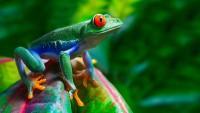 Foto Quali sono gli animali che cambiano colore?