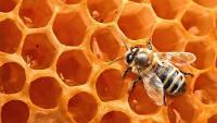 Foto Come le api producono il miele