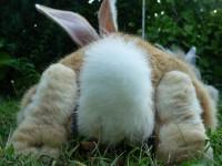 Foto La coda del coniglio: a cosa serve e tanto altro