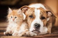 Foto Cibo per cani e gatti: migliori negozi online per risparmiare