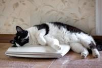 Foto Il mio gatto è troppo magro: perchè?