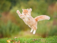 Foto Il mio gatto ha problemi a saltare: perchè?