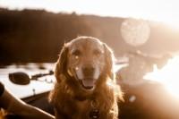 Foto Cremazione cane: un addio con amore