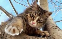 Foto Perchè i Gatti non sanno scendere dagli alberi?