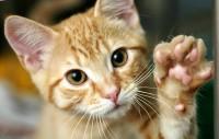 Foto Il mio gatto è stato morso: cosa posso fare?