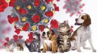 Foto Varianti di coronavirus trovate per la prima volta negli animali domestici