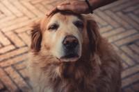 Foto Terapia con onde d'urto nei cani