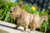 Foto Perchè i cani vivono meno degli umani?