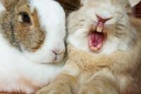 Foto Il coniglio può contrarre il tetano?