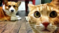 Foto I gatti possono vedere i raggi infrarossi?