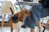 Foto Perché i cani annusano gli umani nelle loro parti intime?