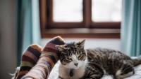 Foto Quanto dorme un gatto? Riposo e routine