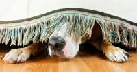 Foto Perchè il mio Cane si isola?