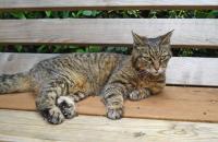 Foto Malattie alle ossa del gatto