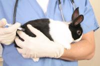 Mixomatosi nel coniglio: cause, sintomi e cure
