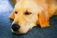 Foto L'Adenocarcinoma nel cane