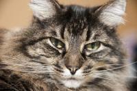 Foto Il gatto starnutisce? Cause e cure